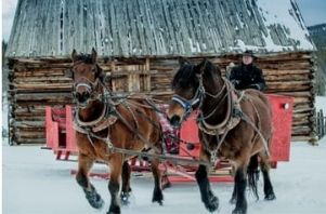 horses pull a red sleigh with a wooden barn in the background
